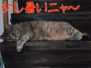 201292775941.jpg