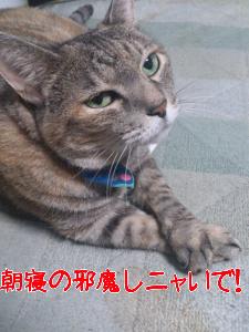 2012957584.jpg
