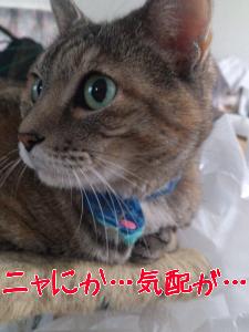 20129821470.jpg