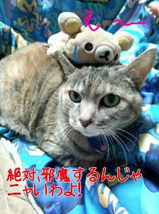 2013-02-07_12.16.48.jpg