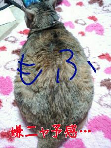 2013-03-03_11.39.51.jpg