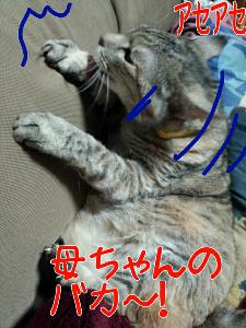 2013-04-16_21.36.38.jpg
