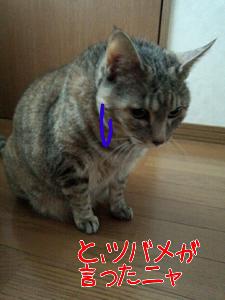 2013-04-27_19.19.24.jpg