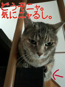 2013-05-30_12.22.34.jpg