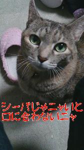 2013102382132.jpg