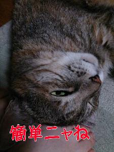 2013108122046.jpg