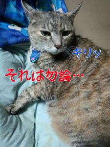 201312112163.jpg