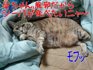 2013129123958.jpg
