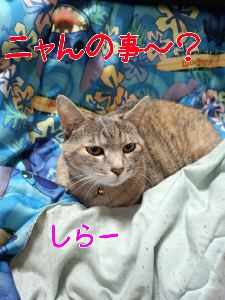 2013312121832.jpg