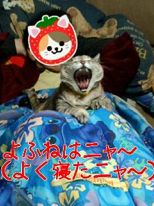 2013314122840.jpg