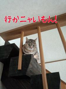 201332575450.jpg