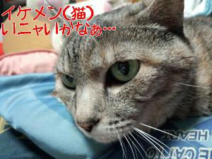 2013331114850.jpg
