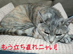 2013412122732.jpg