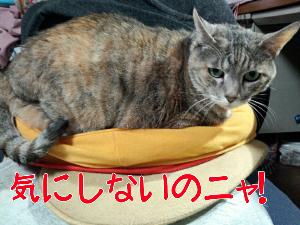 2013421105944.jpg