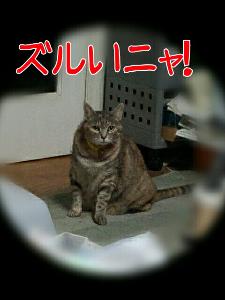 2013424175031.jpg