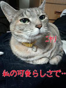 2013510125538.jpg
