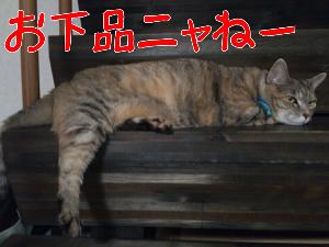 2013515122236.jpg