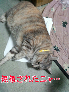 2013527122131.jpg