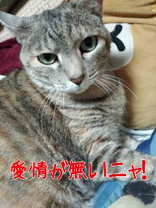 20135775559.jpg