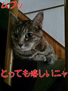 2013620122059.jpg