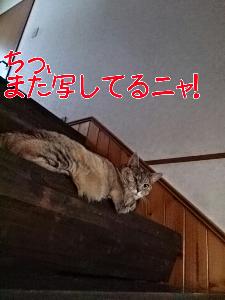 2013627121546.jpg