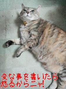 201364122558.jpg