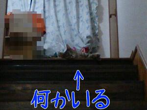 20137108158.jpg