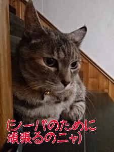 2013719121817.jpg