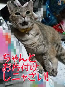 2013721214629.jpg
