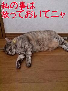 201372575916.jpg