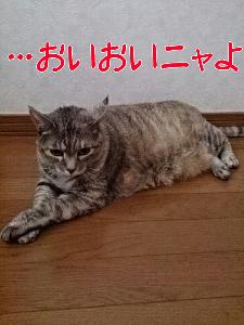2013725805.jpg