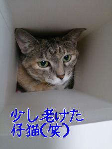 201381618252.jpg