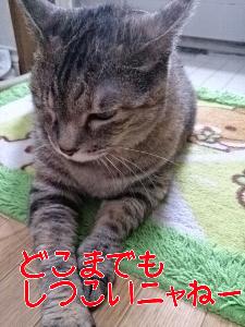 201387121446.jpg