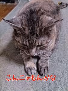 2013926122146.jpg