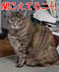 201395122422.jpg