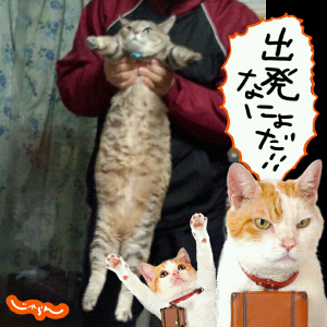 IMG_20121226_225616.jpg